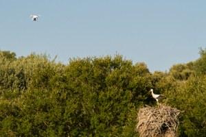 GIS SIGnatur Censos Aves Extremadura Cigueña NaturGIS