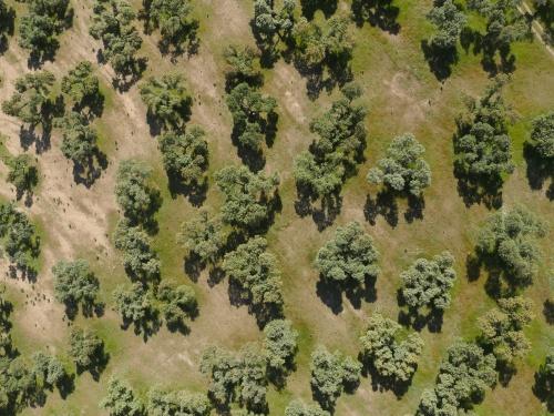 Dehesa Extremadura NaturGIS Dron Cartografía Fotogrametría