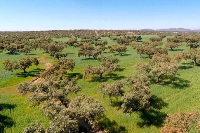Dehesa Extremadura NaturGIS Dron Cartografía