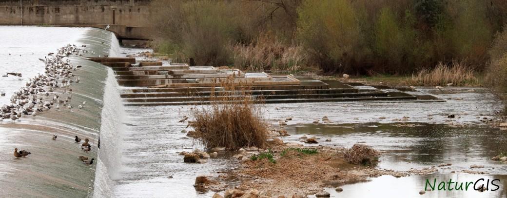 Azud de Badajoz sobre el río Guadiana