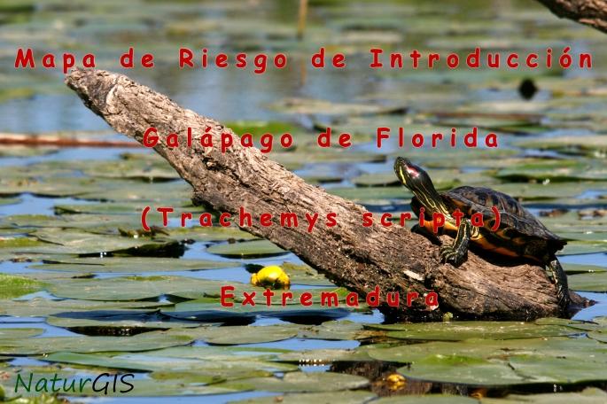 Mapa de la Especie Invasora Galápago de Florida Trachemys scripta en Extremadura