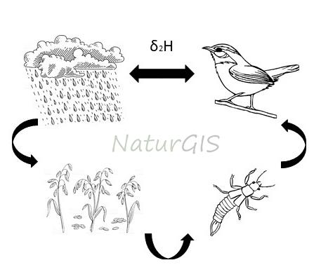 Ciclo natural del isótopo estable del deuterio en la naturaleza