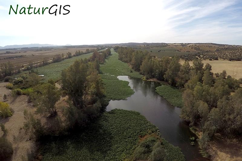 Camalote sobre el río Guadiana a vista de drone