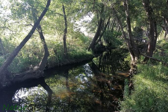 Rio Gevora Proyecto Biodiversidad en el Rio Gevora Alto Herpetos NaturGIS